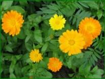 Высокая витаминность индивидуальных растений