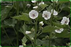 Количество лечебных растений которое следует иметь в саду