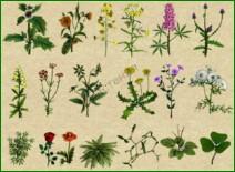 Семена большинства древесно-кустарниковых растений