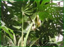 Крупноплодные пригодные для выращивания