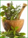Пересадка взрослых растений