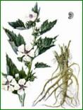 Замораживание и оттаивание плодов рябин и аронии